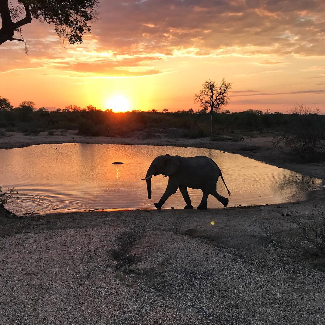 How to plan for an African Safari